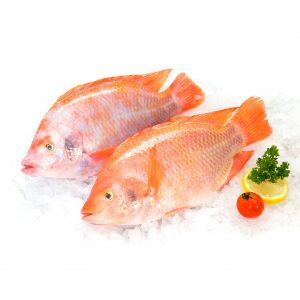 venta de pescado en bucaramanga